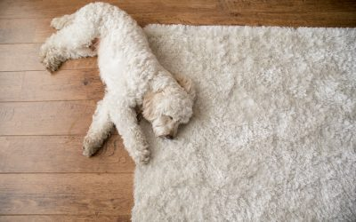 The Worst Things You Can Do To Your Area Rug
