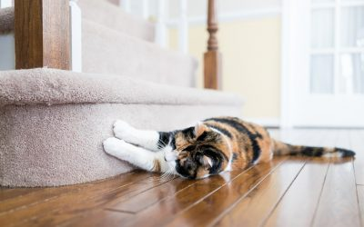 Why Your Cat Scratches the Carpet and How to Prevent It