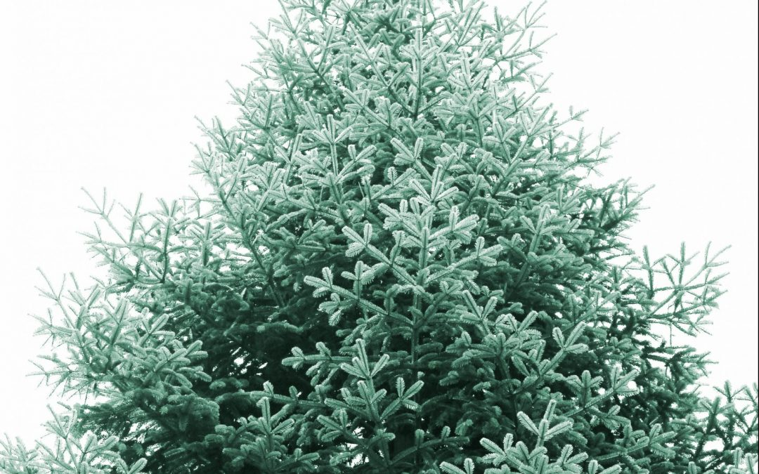 How to Clean Up Your Tree After the Holidays